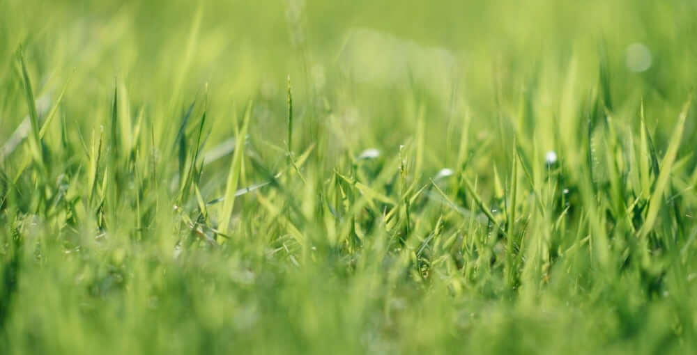 ProGreen Grass Closeup