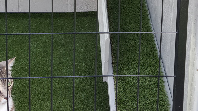 Close up of cat in cage that has artificial turf