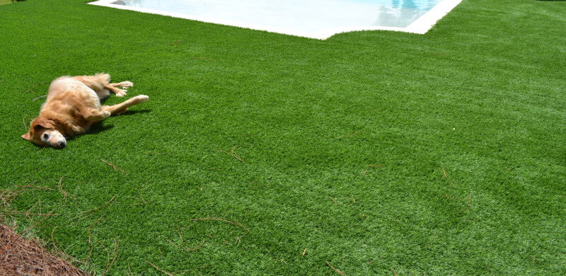 Dog rolling on artificial turf next to pool