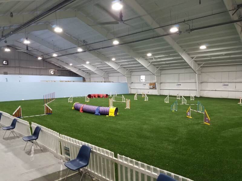Walpole Dog Agility Course with artificial turf