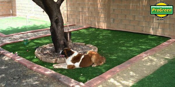 dog resting next to tree surrounded by artificial turf