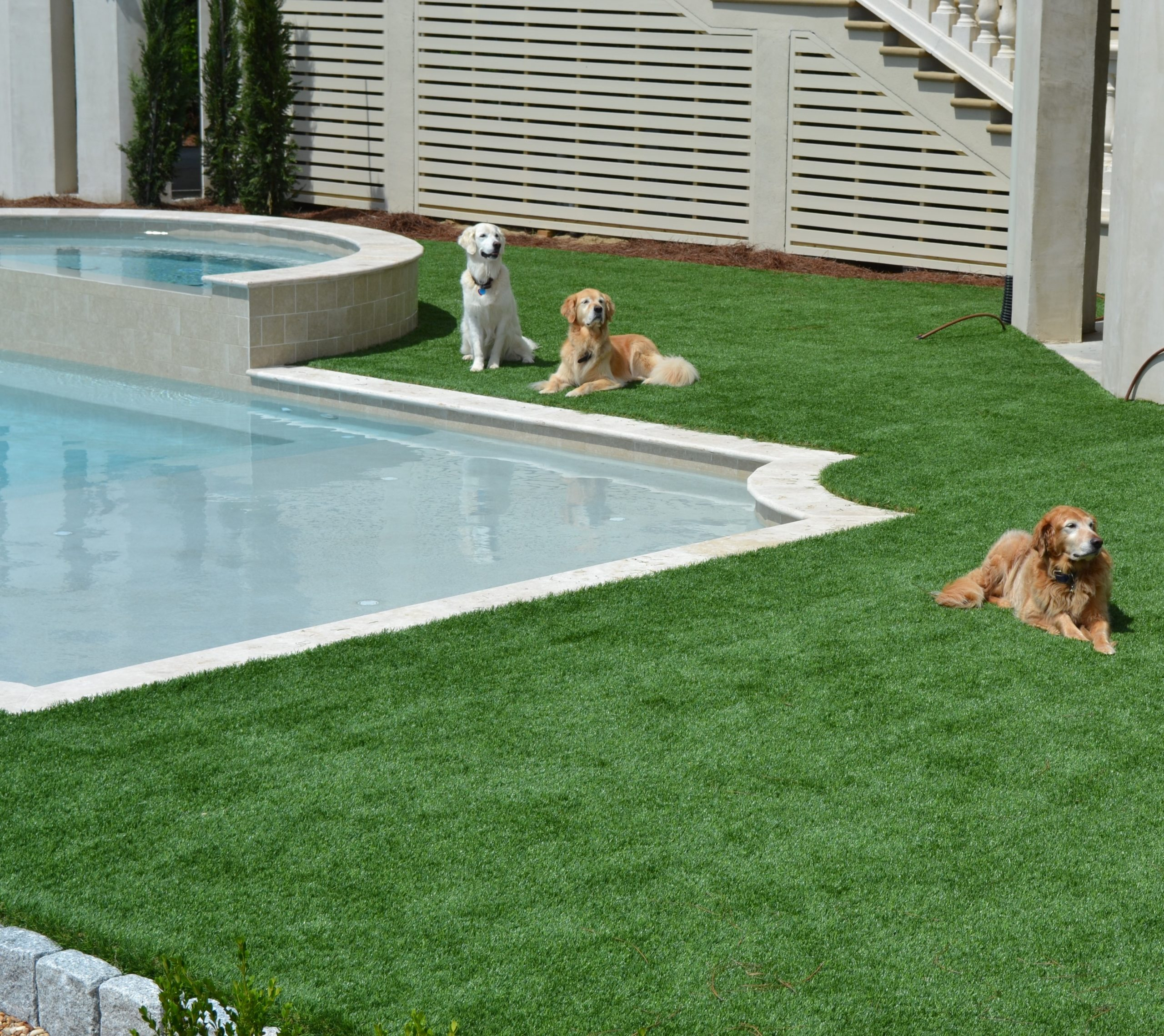 Dogs relaxing on artificial turf next to pool