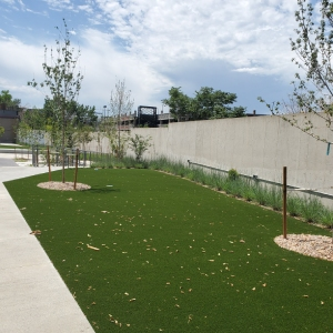 Denver Commercial Turf Project