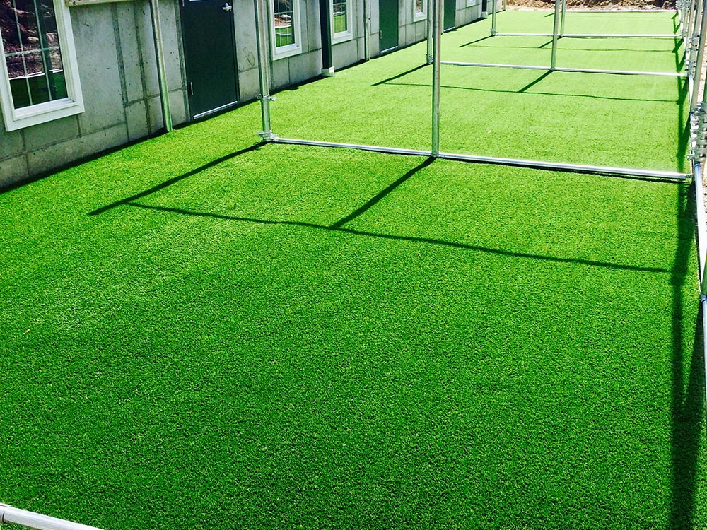 Dog Kennels on artificial turf