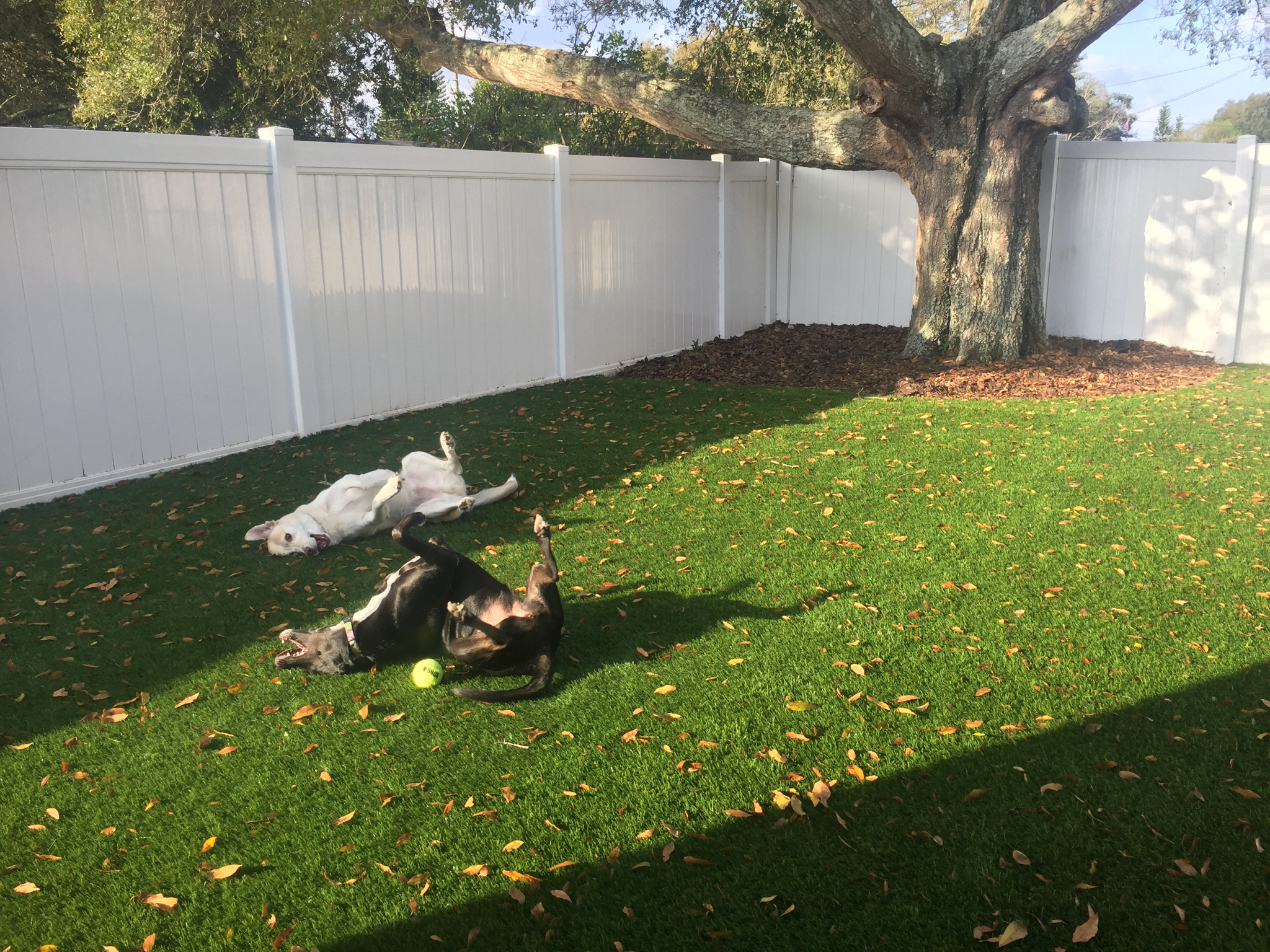 dogs enjoy pet turf orlando fl