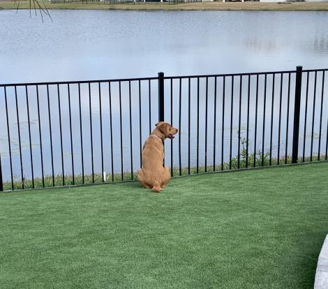 Dog sitting on turf next to lake