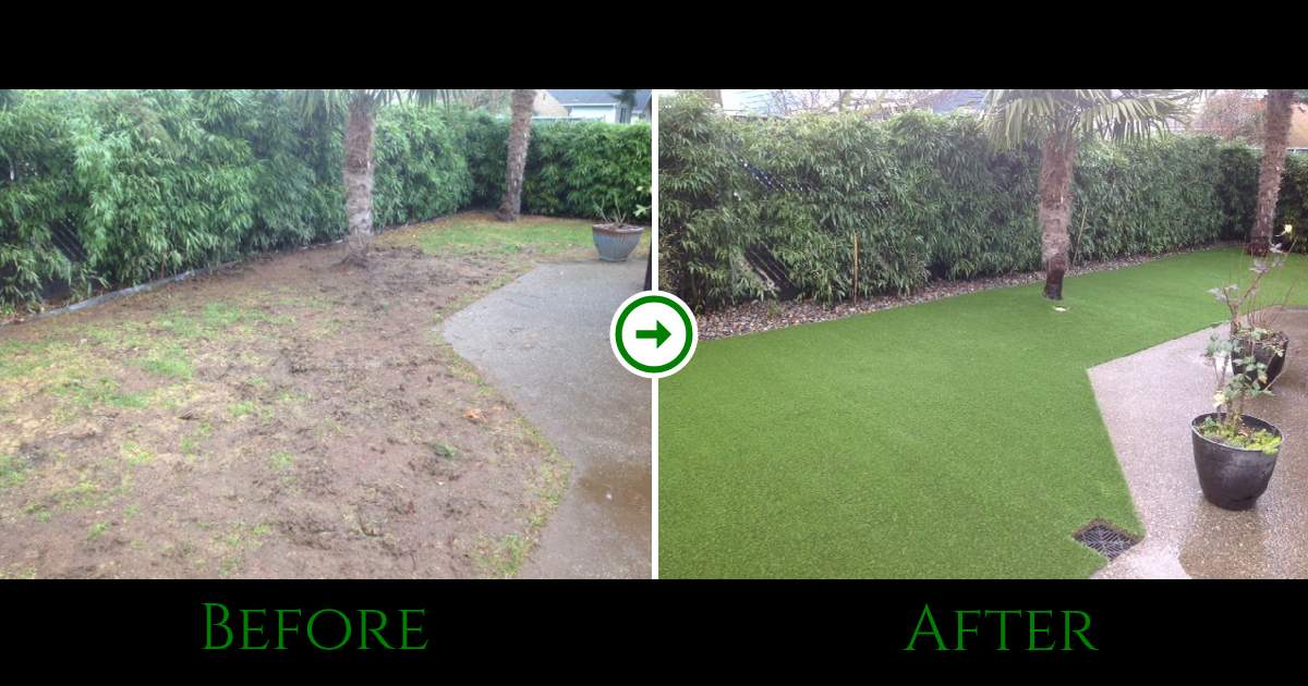 Seattle Dog Grass Before and After