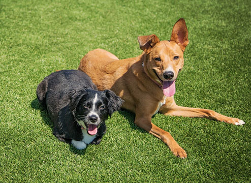 best type of artificial grass for dogs
